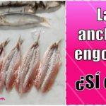 las anchoas engordan