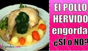 engorda comer pollo hervido